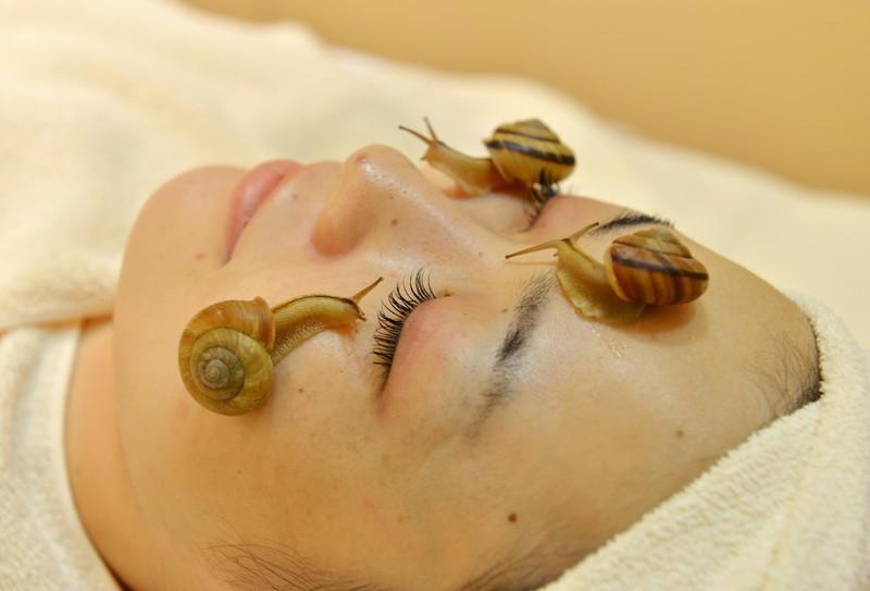 śluz ze ślimaka właściwości w kosmetyce