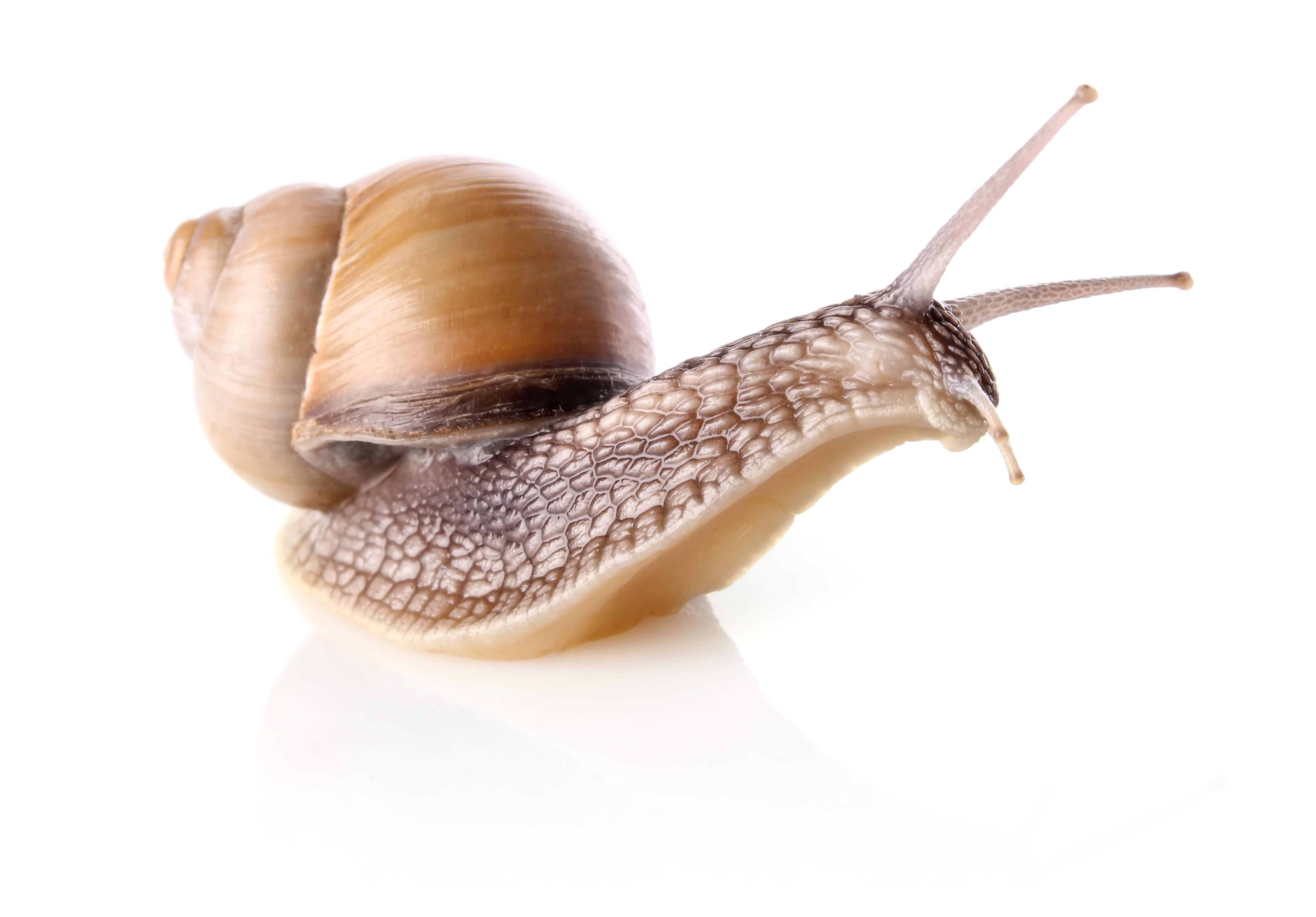 śluz ze ślimaka krem